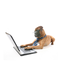 Boxer on laptop